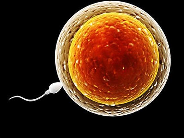 Hình ảnh về chu kỳ của ngày rụng trứng.