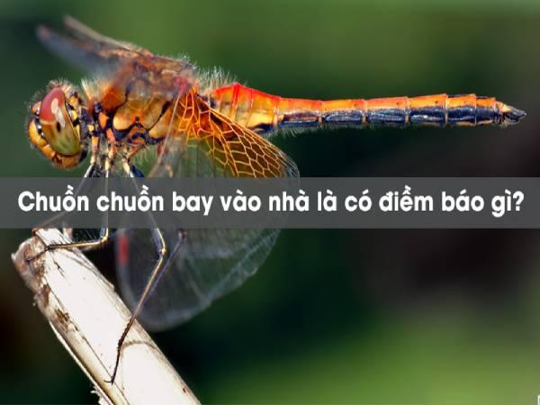 Chuồn chuồn bay vào nhà mang đến điềm báo tốt hay xấu